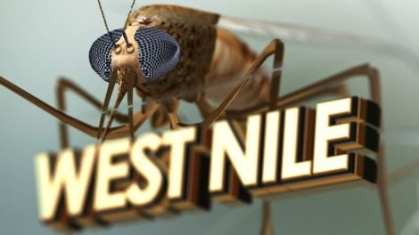 Two people test positive for West Nile virus in Guelph