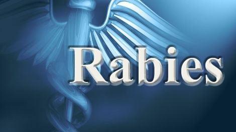 rabies1 Caption