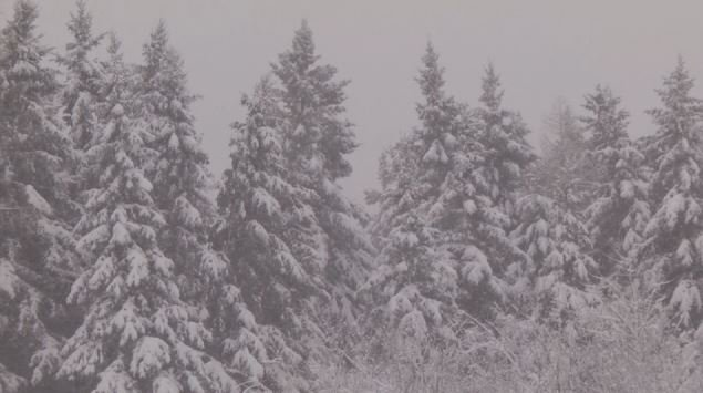 a white christmas in the north country this year is a total switch from what it was like last christmas - What Is A White Christmas