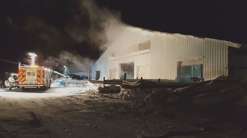 Most Cows Live After Barn Roof Collapses In Ellisburg